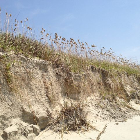 Sand Dunes at Isle of Palm