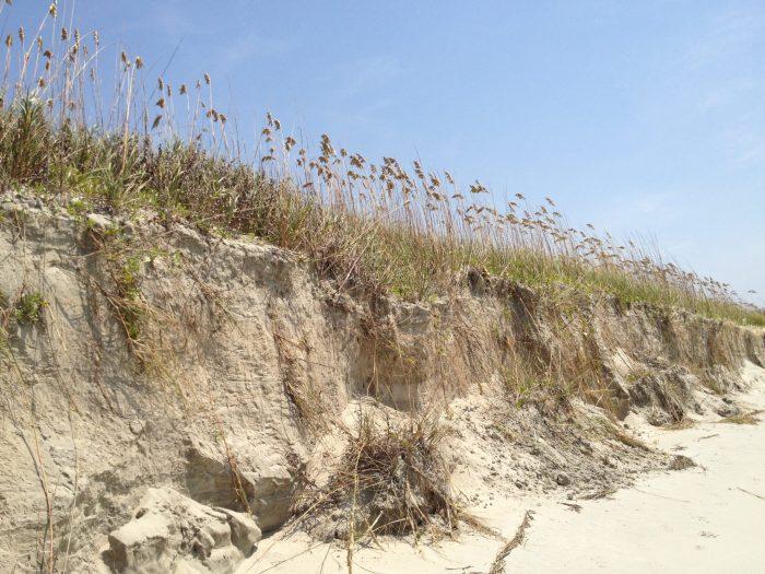 Sand Dunes at Isle of Palm